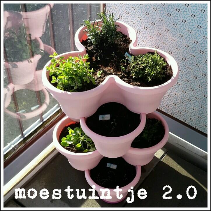 Moestuintje 2.0: op zoek naar leuke plantenbakken