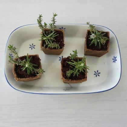 Wat je nog meer kunt kweken in de moestuin bakjes