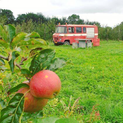 Onze kids bucketlist voor deze herfst: leuke herfstvakantie activiteiten, zoals fruit plukken