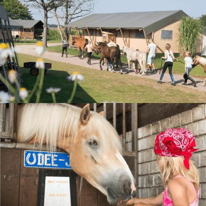 Een overzicht van heel veel leuke idyllische campings in Nederland met kids #leukmetkids FarmCamps Breehees in Goirle bij Tilburg, Noord Brabant