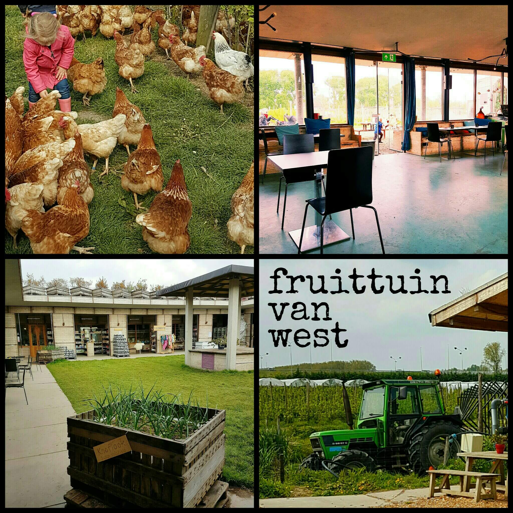 Boerderij in Amsterdam: de Fruittuin van West