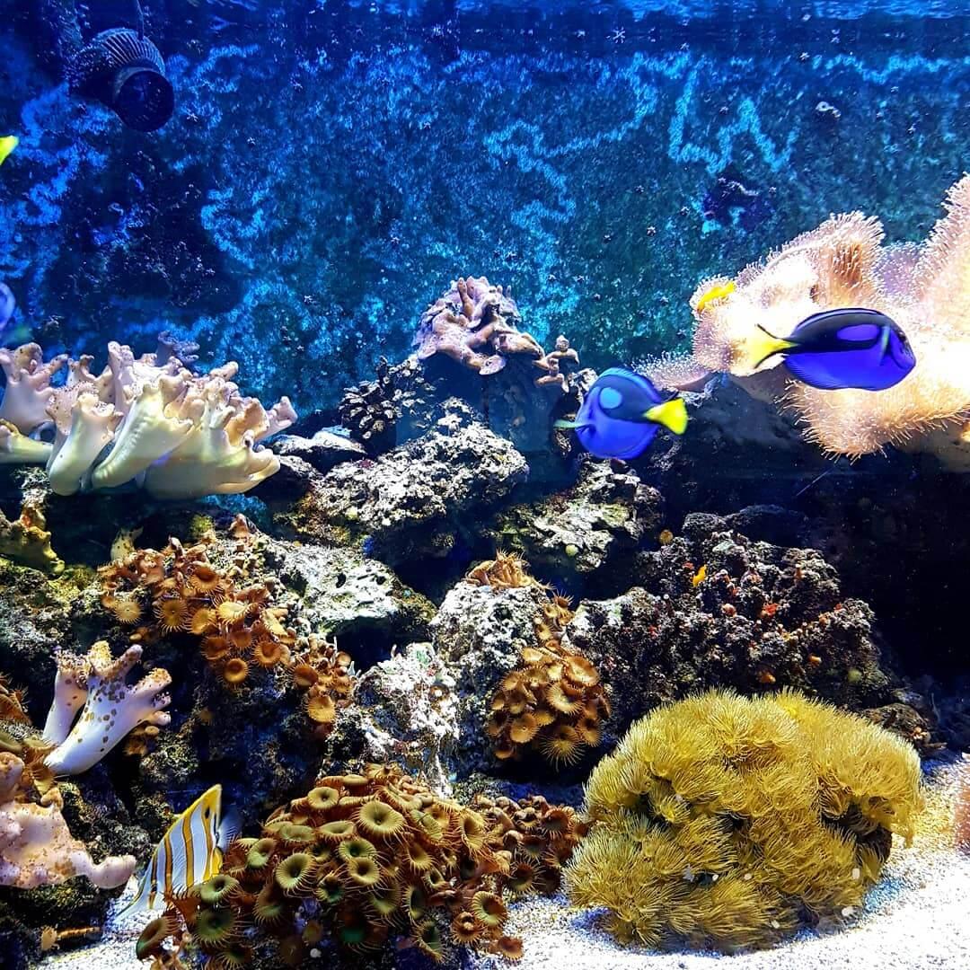 het aquarium van Artis