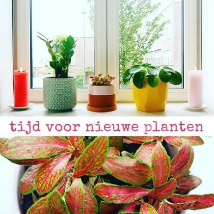 Tijd voor nieuwe planten: pannenkoekenplant, mozaïekplant en zz plant