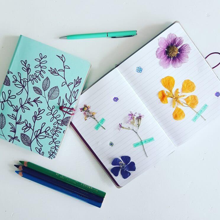 DIY: een herbarium van droogbloemen maken met de kinderen