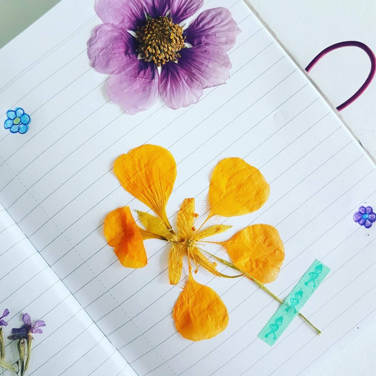 DIY: een herbarium maken met de kinderen