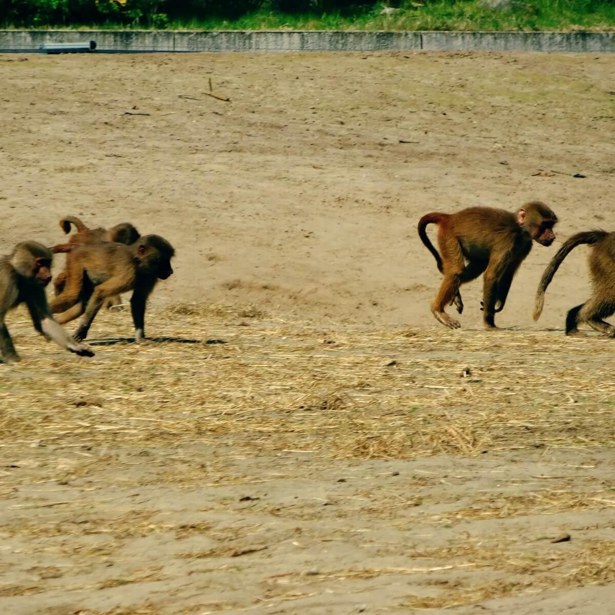 Slapen in Safari Resort Beekse Bergen en ontbijten met uitzicht op de leeuwen en giraffen
