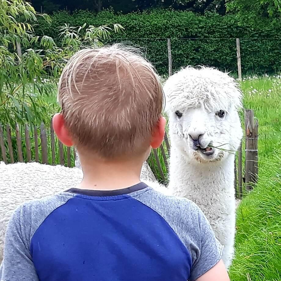 Uitje met kids: dieren kijken op alle werelddelen in Almere Jungle
