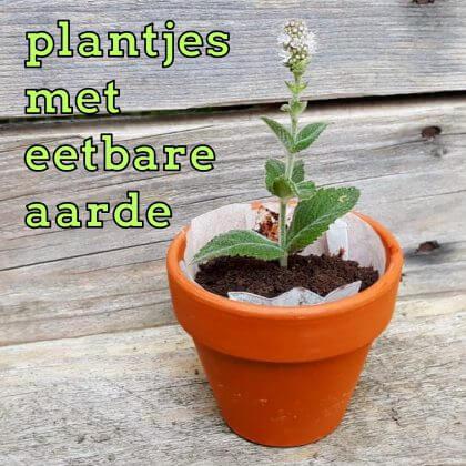 Leuk én lekker cadeautje maken met kids: plantjes met eetbare aarde