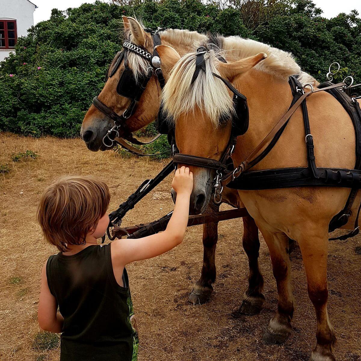 Vakantie met kids: sprookjesachtig Funen in Denemarken - huifkartocht schiereiland Enebærodde bij Hasmark