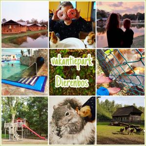 Vakantiepark Dierenbos in Vinkel in Brabant
