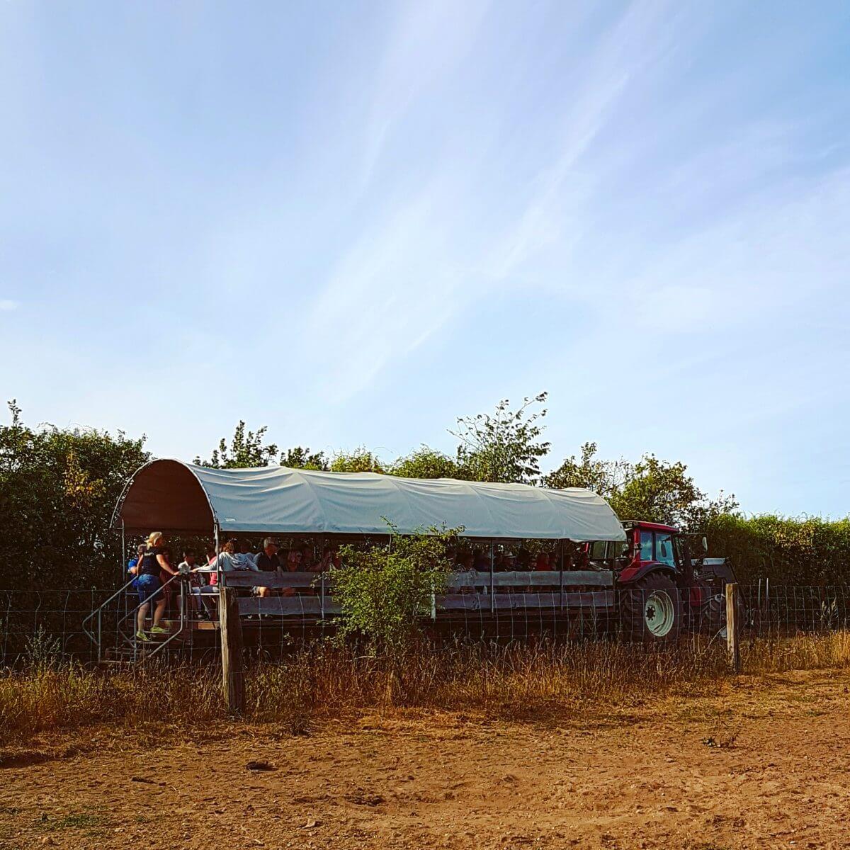 Ditlevsdal Bisonfarm: op bisonsafari of zelfs slapen tussen de bizons, op het eiland Funen in Denemarken #leukmetkids #vakantie #kinderen
