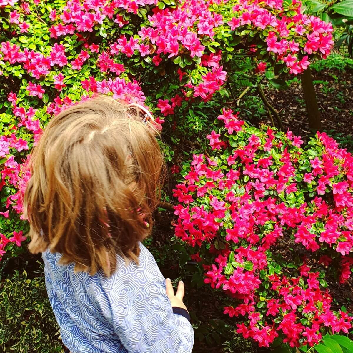 Bloemen in de Hortus Botanicus
