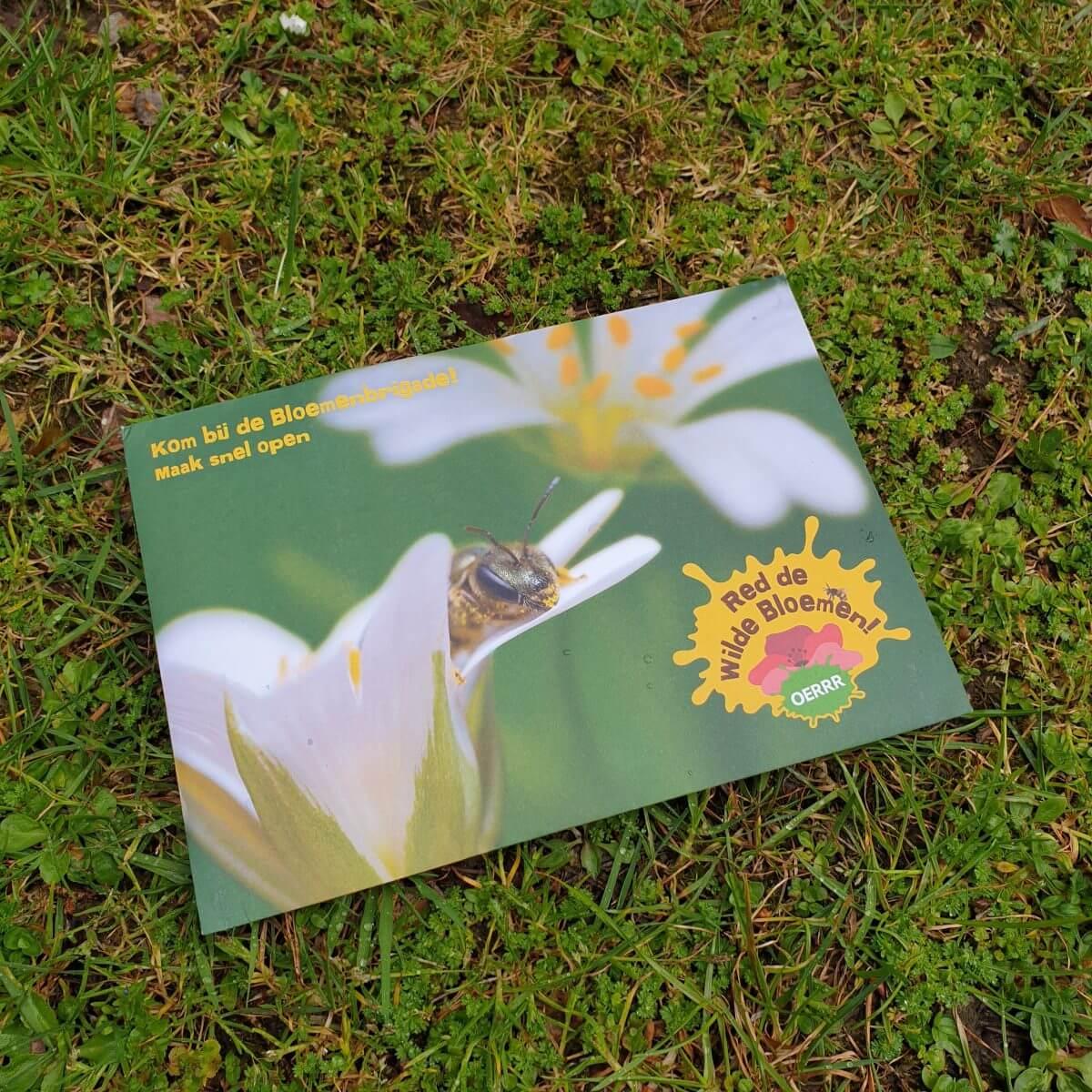 actiepakket Oerrr Natuurmonutenten wilde bloemen en bijen