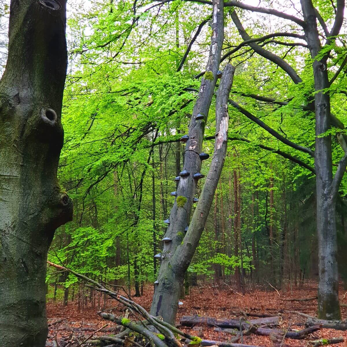 Fietsend de natuur ontdekkenop de Veluwe rondom Landal Rabbit Hill