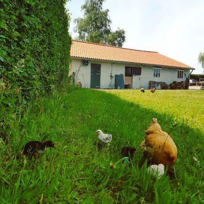 Kamperen in de achtertuin van Campspace boerderij De Lieve Wies
