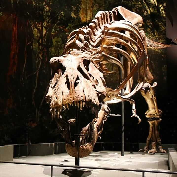 Museum Naturalis met kinderen: dinosaurus