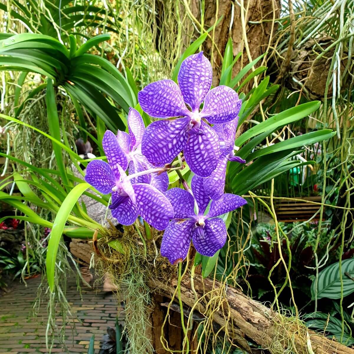 bloemen in de Orchideeënhoeve
