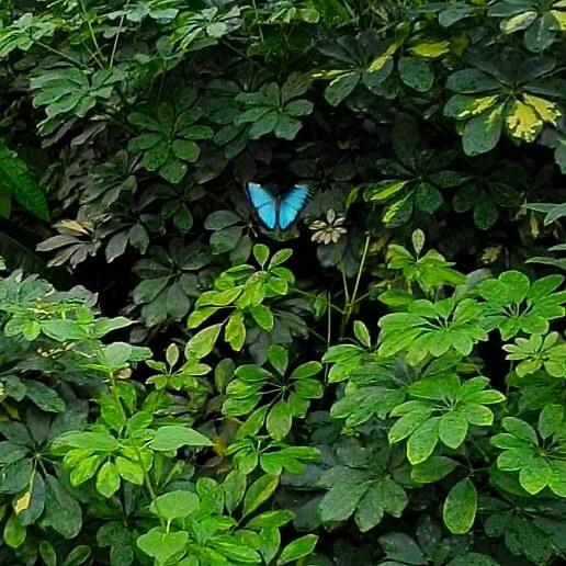Vlinder vallei van de Orchideeënhoeve