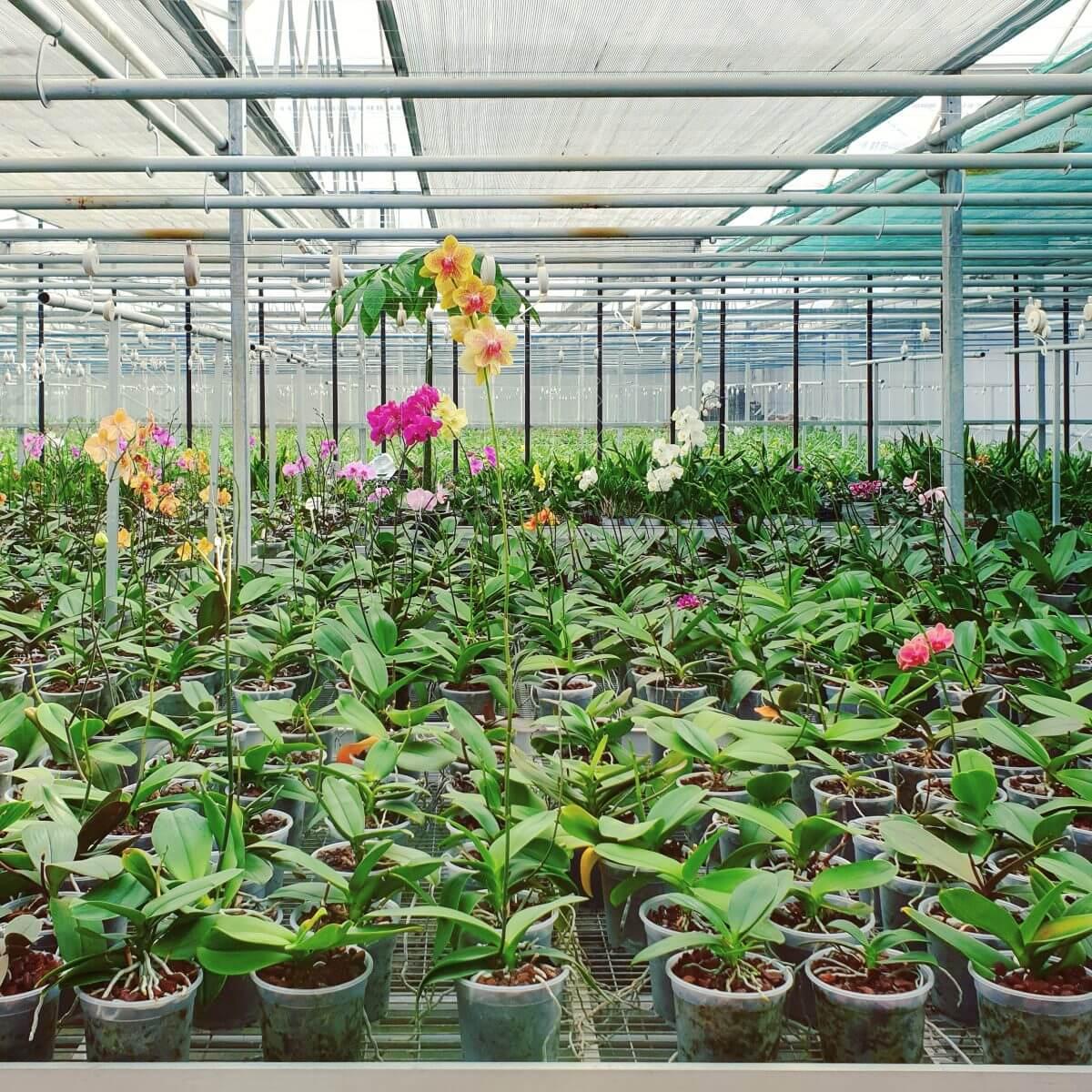 Binnen uitje met kinderen in Flevoland: de Orchideeënhoeve
