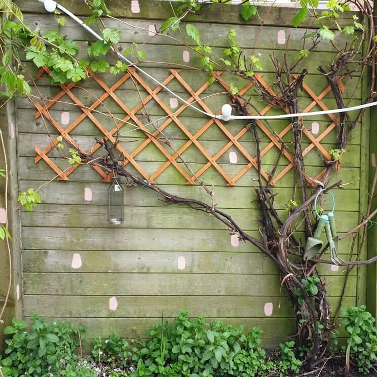 Houten schutting verven en opknappen: een kleurrijke eyecather in de tuin