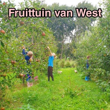 Boerderij in Amsterdam: fruit plukken bij de Fruittuin van West