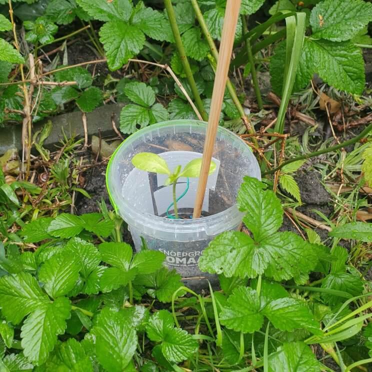 jonge moestuin plantjes beschermen tegen slakken