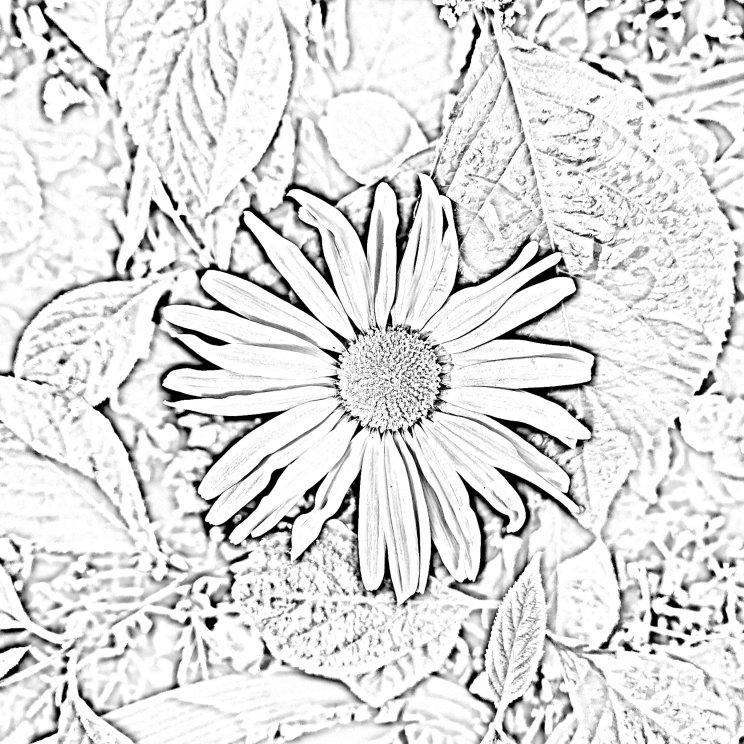 Bloemen knutselen en knutselen met bloemen. Kleurplaat maken van een foto.
