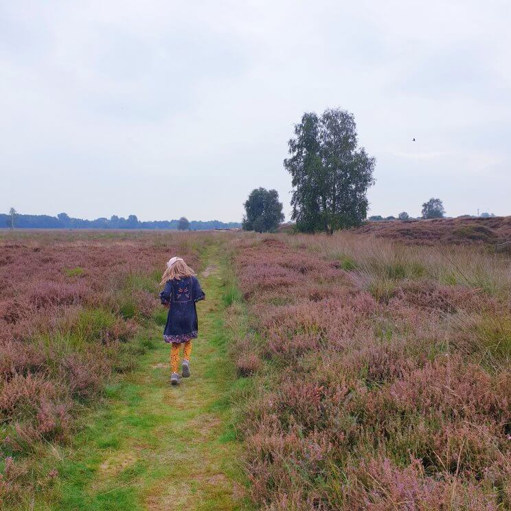 Bij de receptie van Landal Gooise Heide kun je een route halen voor een wandeling van ongeveer 5 kilometer, speciaal voor gezinnen. Deze route gaat langs een paar leuke plekken. Met kleintjes kun je stoppen bij Kinderboerderij de Warande. Wij stopten bij de waterspeeltuin daar vlakbij.Onderweg kom je stukken bos tegen, met kleine zandverstuivingen. De heide rondom natuurreservaat Groeve Oostermeent is ook prachtig. Ook kom je nog langs een heemtuin.