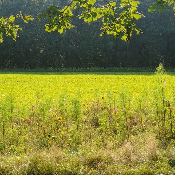 De Limitische Heide en de Vliegheide zijn prachtig, je parkeert bij parkeerplaats Nieuw Bussumerheide. In de herfst bloeit de heide prachtig en worden de bramen langzaam rijp, maar er staat ook veel brem die in het voorjaar bloeit. We liepen de paarse wandelroute, langs heide, een zandverstuiving, bos en een wilde bloemenveld. We weken alleen even van de paarse route af voor een tussenstop bij theehuis Bos En Hei. Dat heeft een terras met toffe speeltuin voor kleintjes. Er is een klimhuisje, trampoline en een overdekte zandbak vol zandbakspeelgoed.